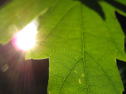 Photosynthesis And Energy For Cells