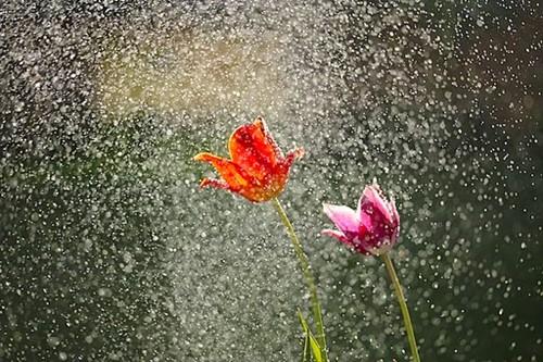 Teaching Spring Showers
