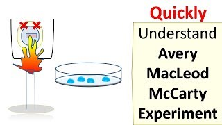 Teaching Avery MacLeod McCarty experiment [video]