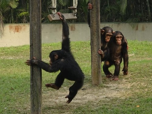 Teaching Zoo complicated: Are captive animals happy?