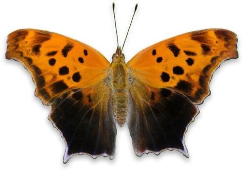 Teaching Butterflies in disguise