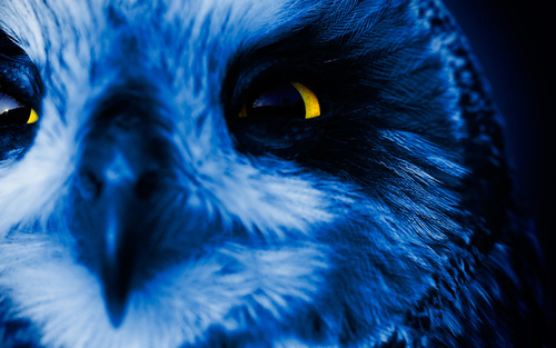 Teaching Owls have a harder time hunting thanks to increased traffic noise