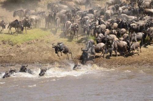 Cenozoic Era - The Age Of Mammals
