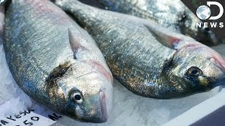 Teaching How does mercury get into fish? [video]