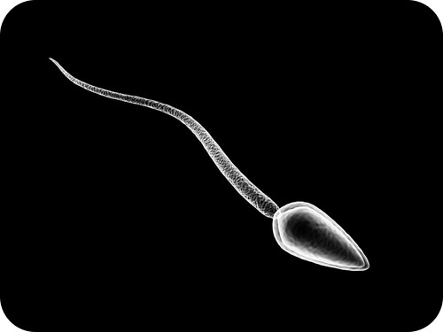 Teaching Human sperm