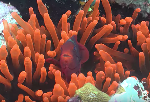 Teaching Exploring Ecosystems: Coral Reef Symbiosis [video]