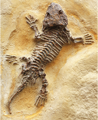Teaching Fossils and How They Form