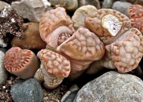 Teaching Plant characteristics