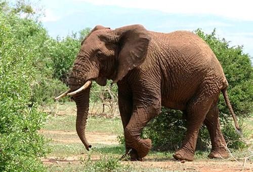 Teaching Elephant