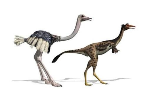 Teaching Bird evolution