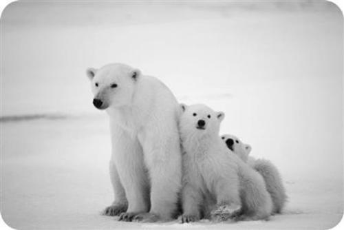 Teaching Human causes of extinction