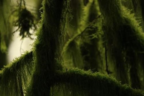Teaching Nonvascular plants