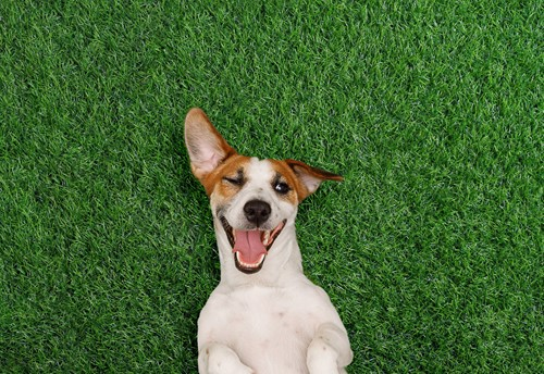 Teaching How Can We Tell If an Animal Is Happy Without a Wagging Tail?
