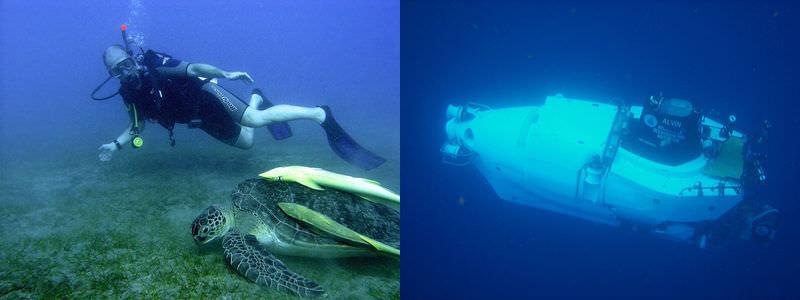 Teaching Types of marine organisms