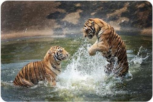 Teaching Learned behavior of animals