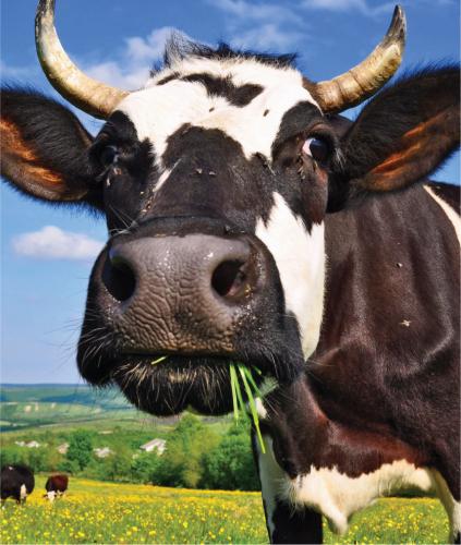 Teaching Cow power!