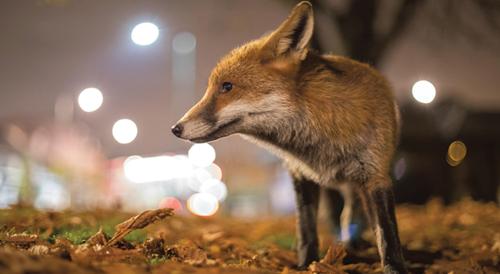 Teaching Living Things Respond to Change