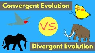 Teaching Convergent Evolution vs Divergent Evolution | Shared Traits Explained [video]