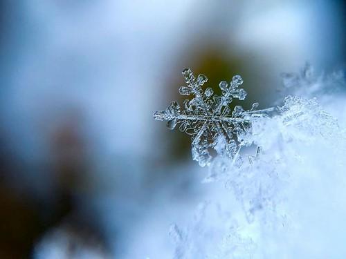 Teaching Snowflakes
