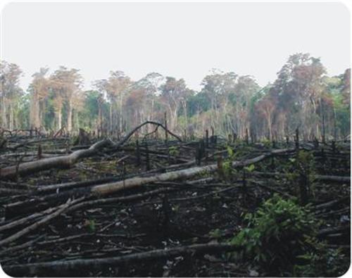 Teaching Habitat destruction