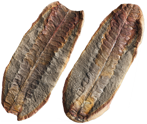 Teaching Fossil clues about changing habitats