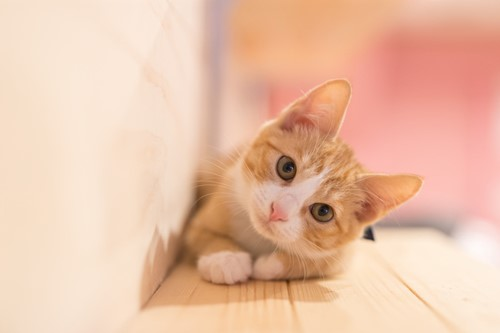 Teaching No, Cats Aren't Uncaring and Selfish