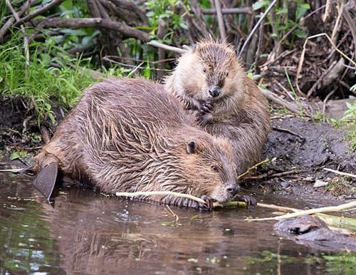 Teaching Busy Beavers