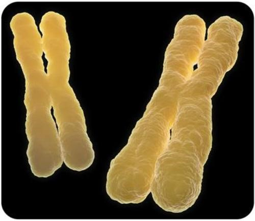 Teaching Chromosomal disorders