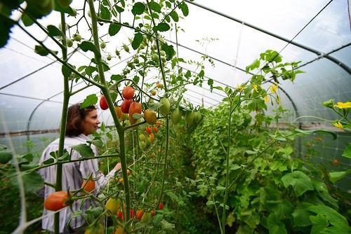 Teaching What do farmers do?