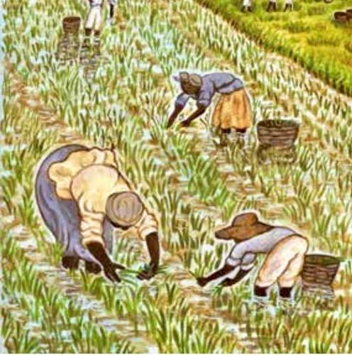Teaching Plantations in South Carolina