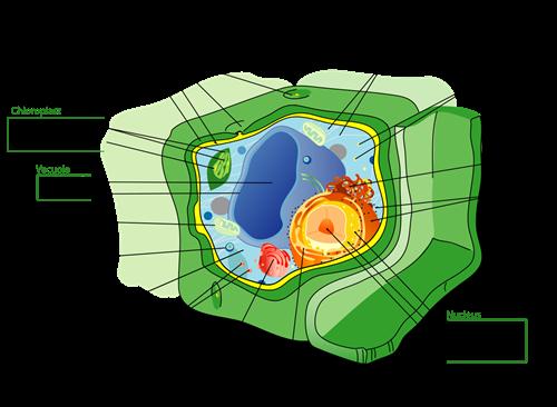 Unit 1: Cells