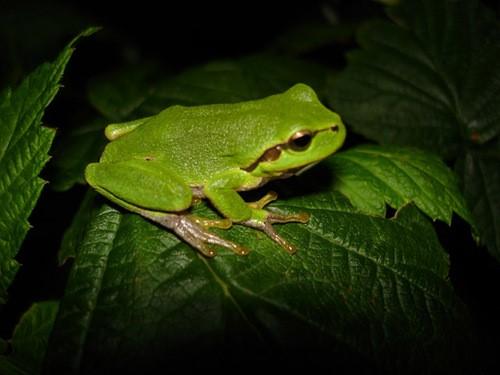 Teaching Amphibians