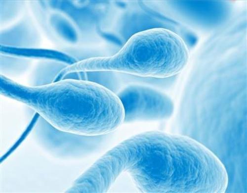 Teaching Human sperm