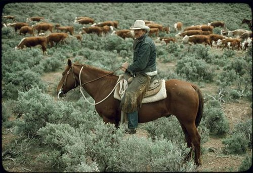 Teaching Mining and Ranching in Nevada
