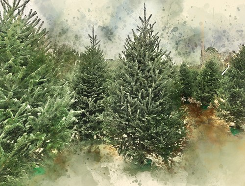 Teaching Why finding a real Christmas tree is harder than ever before