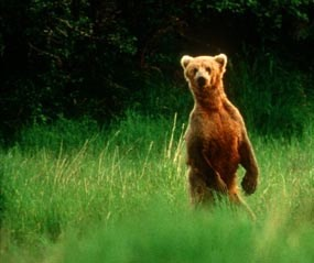 Teaching When Grizzlies Walked Upright