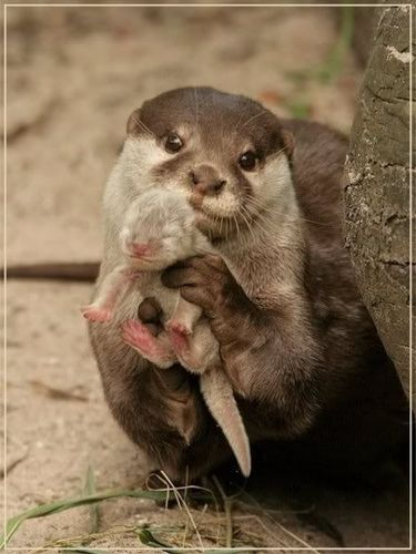Little Bear and the Lost Otter Baby