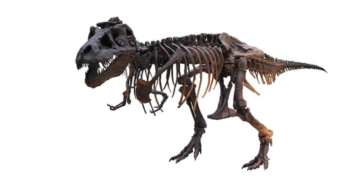 Teaching T. rex pulverized bones with an incredible amount of force