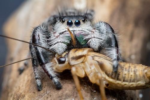 Teaching Slurping Spiders