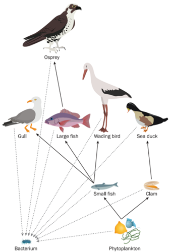 Teaching Food chains and food webs