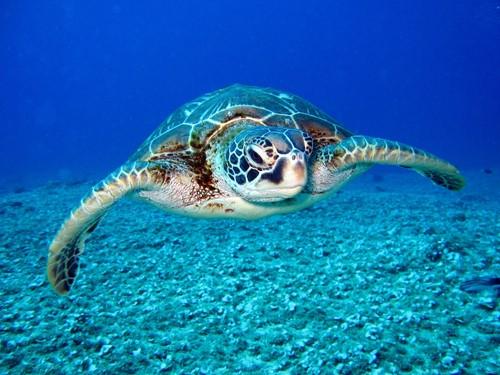 Teaching TurtleCam: Underwater Video Reveals Secret Life of Sea Turtles