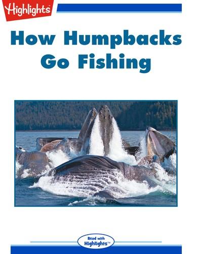 How Humpbacks Go Fishing