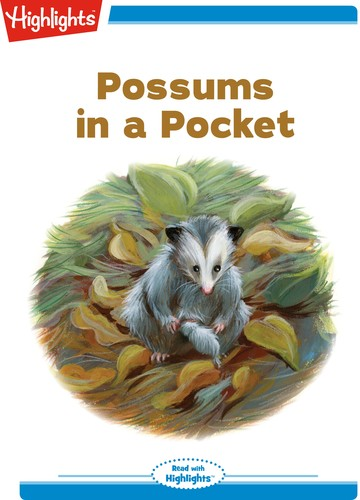 Possums in a Pocket