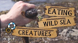 Teaching How to find your own seafood [video]