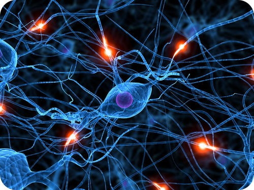 Teaching Nerve cells and nerve impulses