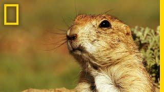 Teaching Prairie dog emergency alert system [video]