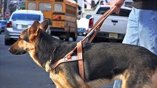 Teaching An extraordinary dog to help me be ordinary [video]