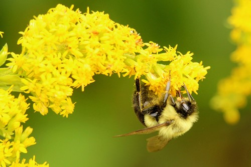 Teaching Spring Signals Female Bees to Lay the Next Generation of Pollinators