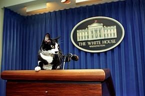 Teaching Champ, Major, and other White House pets