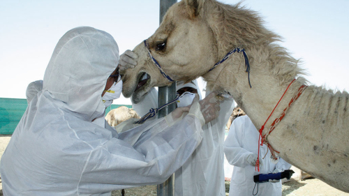 Teaching When physicians and veterinarians team up, all species benefit